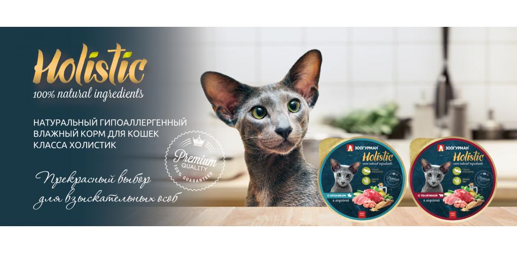 Holistic_cat