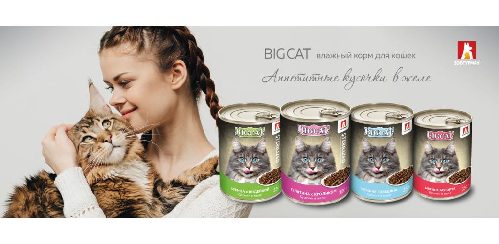 BigCat