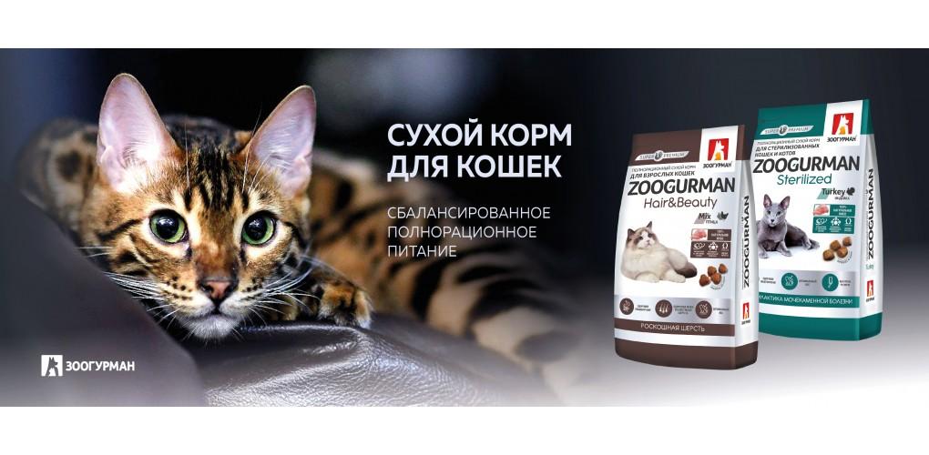 SuhoyKorm_Cats
