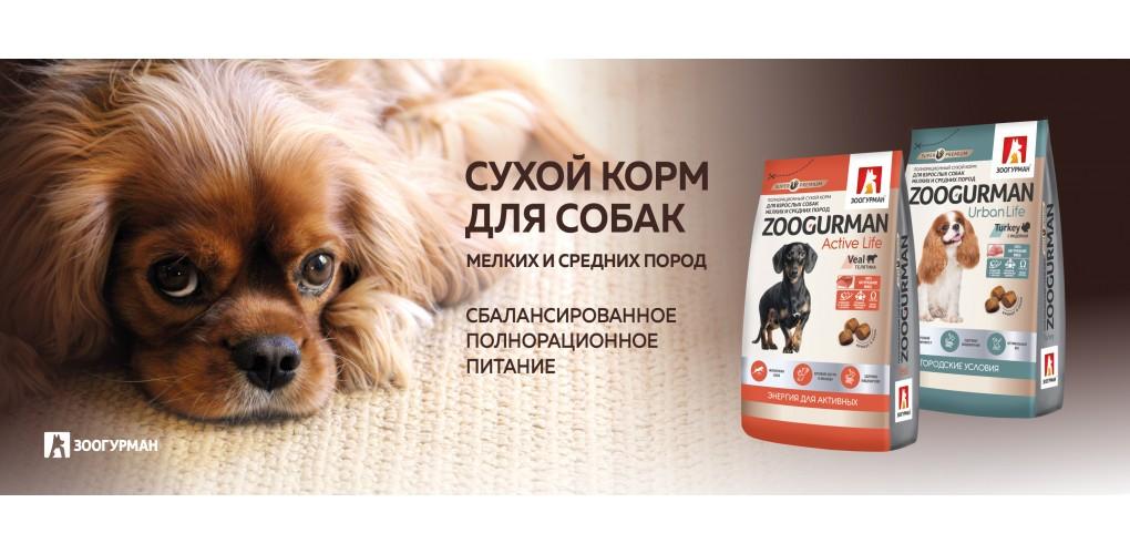 SuhoyKorm_smallDOGs